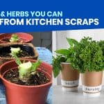 10 VEGGIES & HERBS YOU CAN GROW FROM KITCHEN SCRAPS
